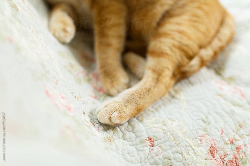 Close up of cat's legs and paw on couch's quilt by Laura Stolfi for Stocksy United