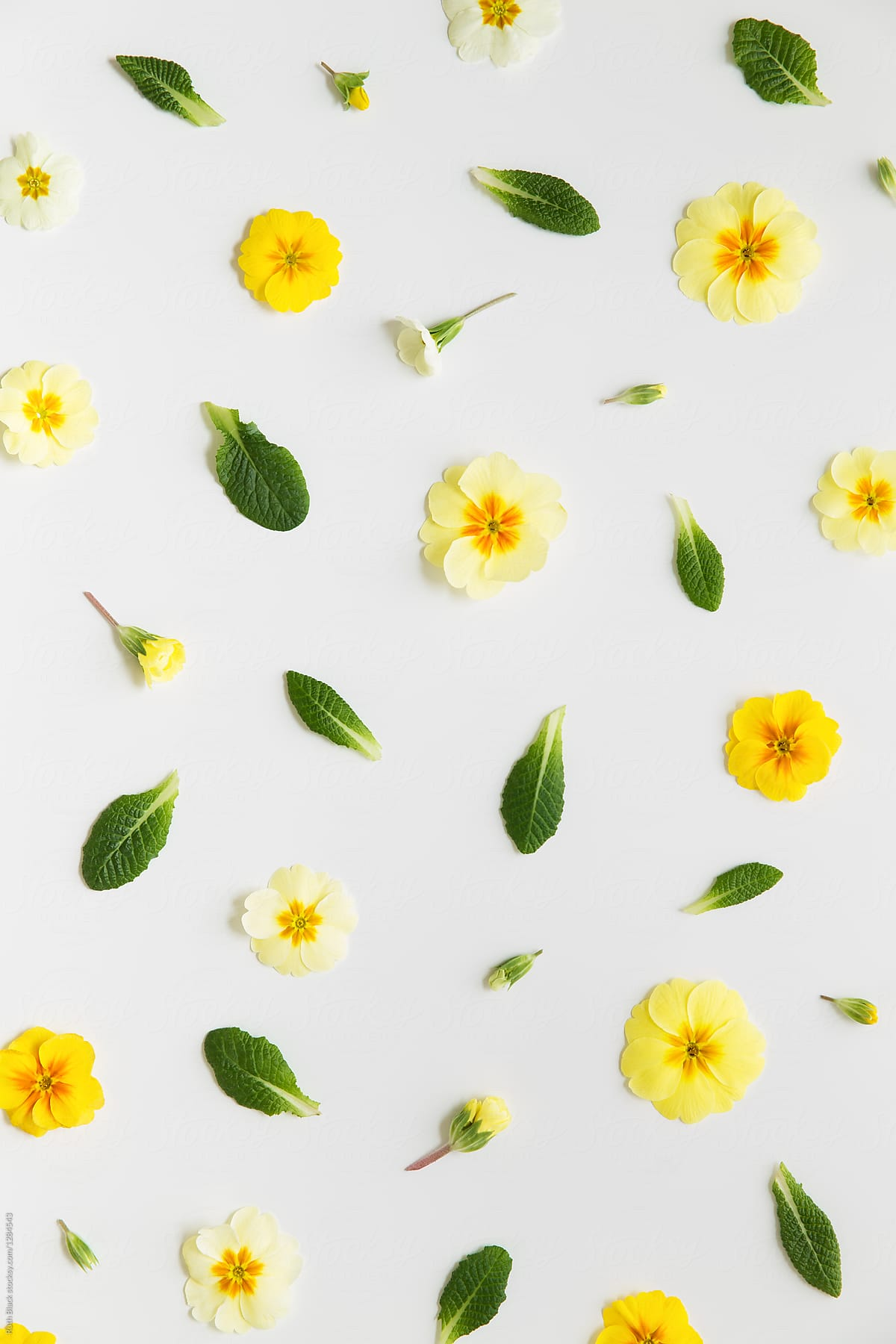 Spring Flowers Realistic Stock Photos Images Photography