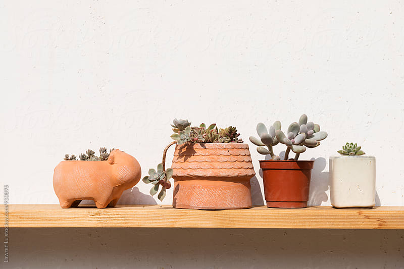 Potted succulent on wooden shelf by Lawren Lu for Stocksy United