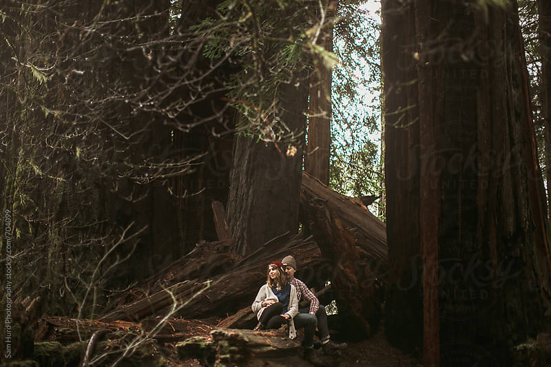 in the redwoods by Sam Hurd Photography for Stocksy United