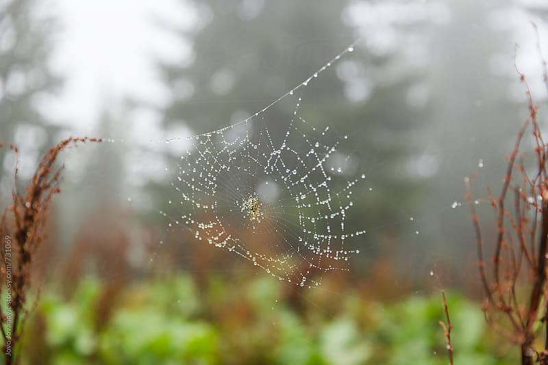 Spider web in a misty morning by Jovo Jovanovic for Stocksy United