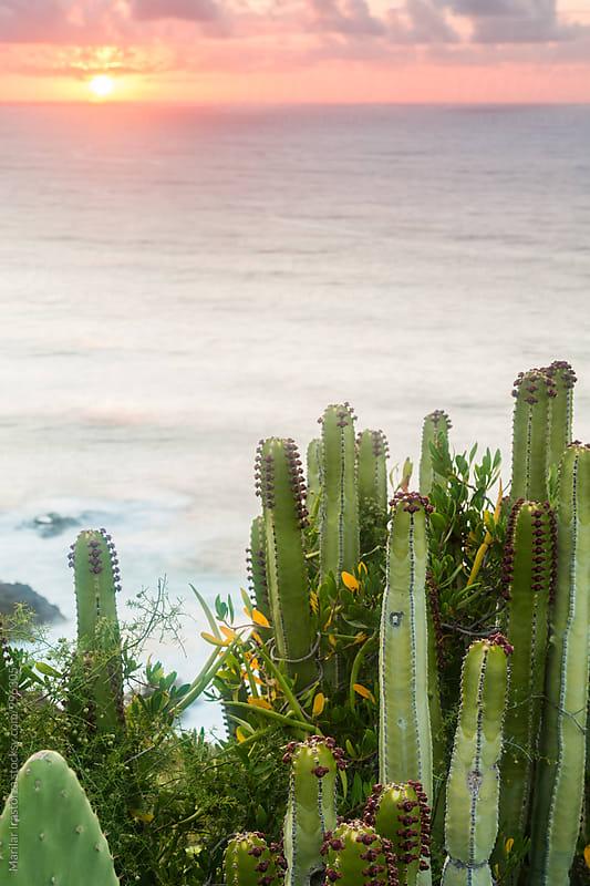 Cactus on a coast at sunset by Marilar Irastorza for Stocksy United