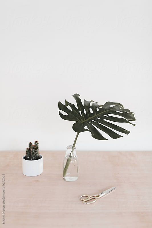plants and scissors on table in artist studio by Nicole Mason for Stocksy United