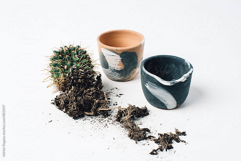 Cacti with Ceramic Pots by Adrian Ragasa for Stocksy United
