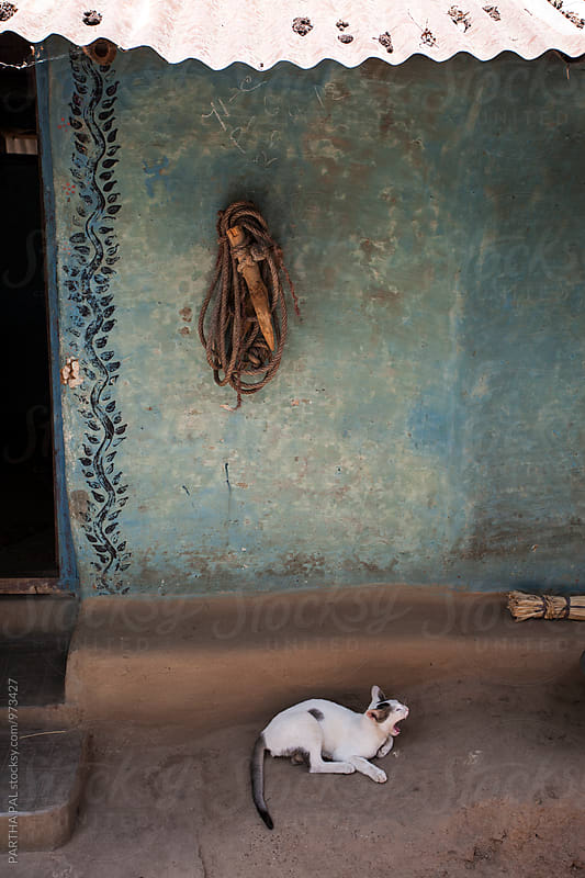 Indian cat yawning in front of a mud built house by PARTHA PAL for Stocksy United