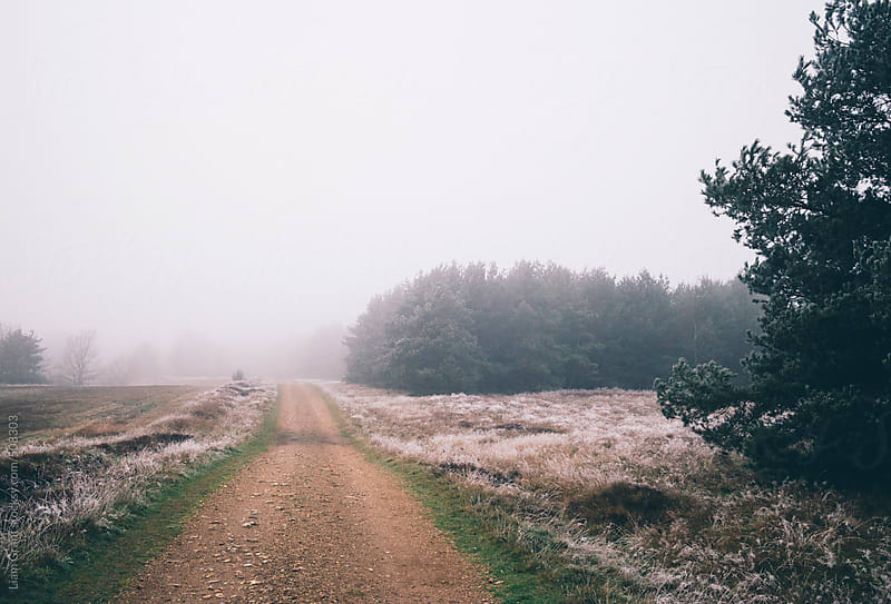 Frosty grass and forestry track in fog.  by Liam Grant for Stocksy United