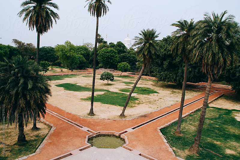 A view of an old garden with palm trees by Murtaza Daud for Stocksy United
