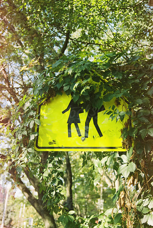 School crossing sign behind vines by Jen Grantham for Stocksy United