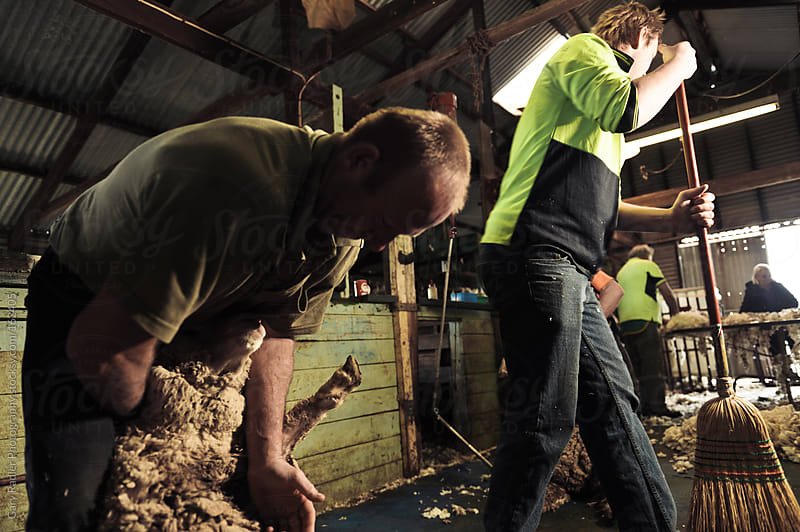 Shearing time in a Shed by Gary Radler Photography for Stocksy United