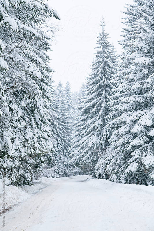 Snowy road in snow forest by Borislav Zhuykov for Stocksy United