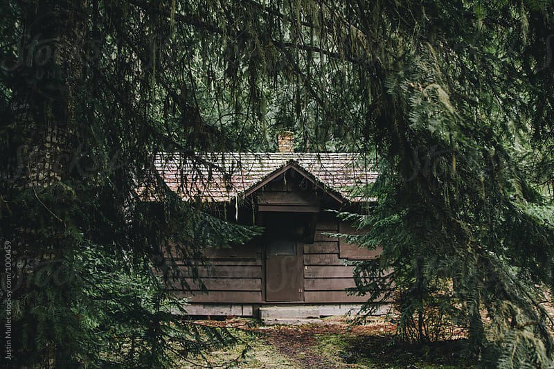 Deserted cabin hidden in the forest by Justin Mullet for Stocksy United
