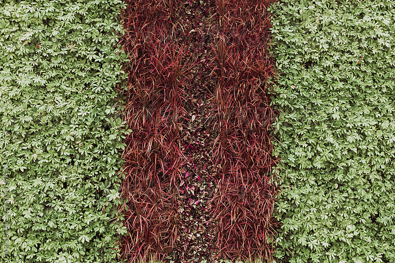 green leaf wall in city by Xunbin Pan for Stocksy United
