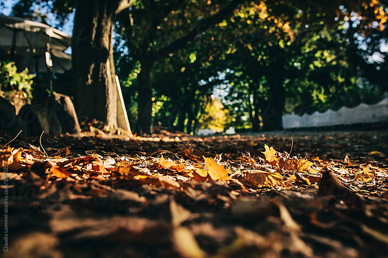 Fallen Leaves on the Street by Claudia Lommel for Stocksy United