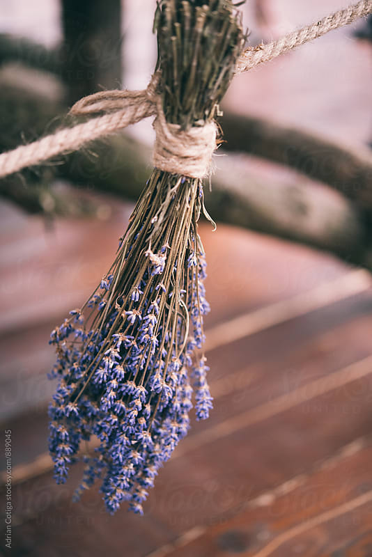 Bunch of lavender tied with a string by Adrian Cotiga for Stocksy United
