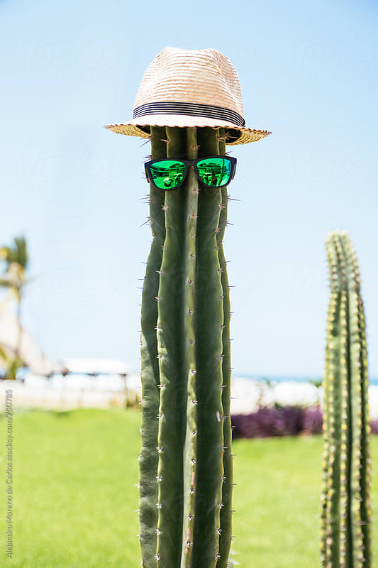 Cactus with sunglasses and hat by Alejandro Moreno de Carlos for Stocksy United
