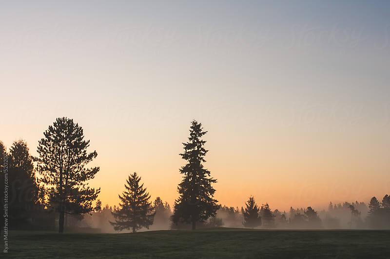 Morning, Fog, Trees by Ryan Matthew Smith for Stocksy United