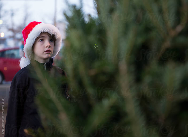 Boy wearing Santa hat gazes up at a tree at a Christmas Tree stand by Cara Dolan for Stocksy United
