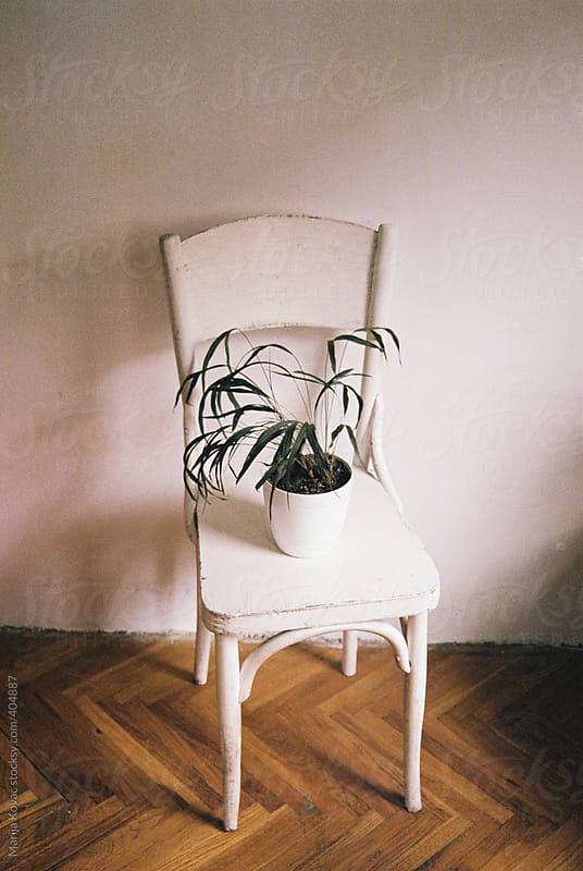 Plant on the white chair by Marija Kovac for Stocksy United
