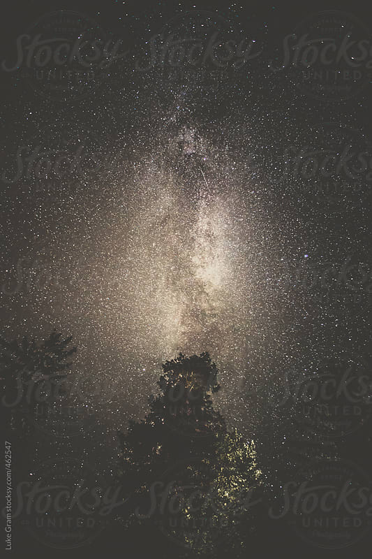 Milky Way above the trees by Luke Gram for Stocksy United