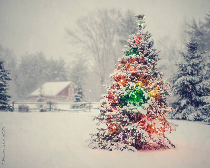 Snowy Christmas Tree by Rob Sylvan for Stocksy United