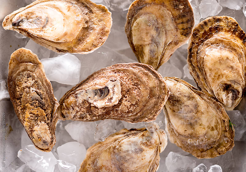 Raw Oysters by Jeff Wasserman for Stocksy United