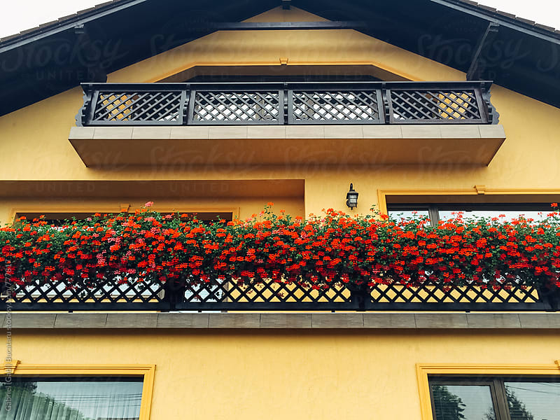 Red flowers on house balcony by Gabriel (Gabi) Bucataru for Stocksy United