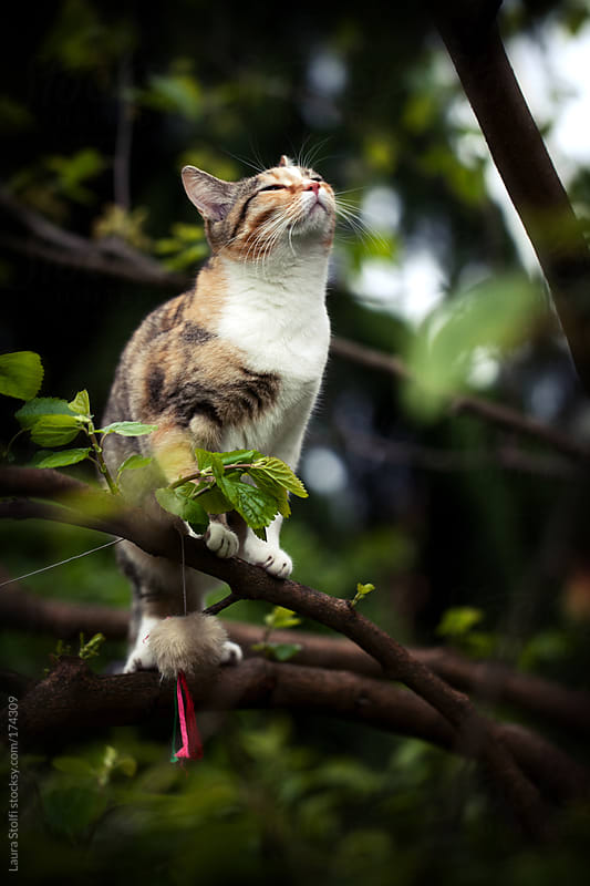 She is a conqueror: young cat on green branch smells the air by Laura Stolfi for Stocksy United
