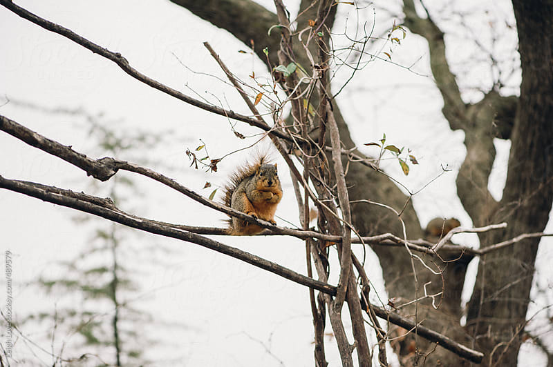 Squirrel in A Tree by Leigh Love for Stocksy United