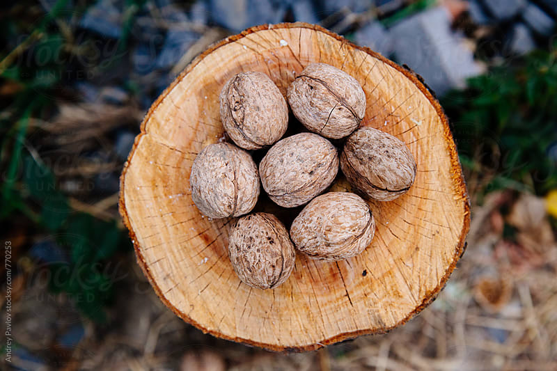 Walnuts on a wooden stump by Andrey Pavlov for Stocksy United