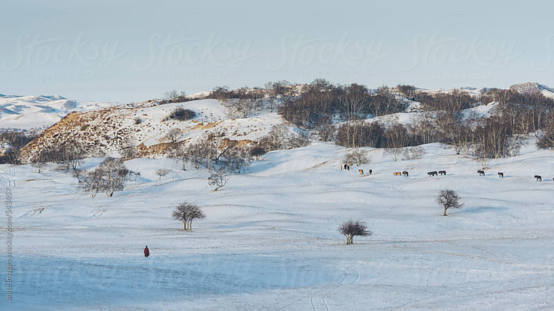 winter meadow by unite images for Stocksy United