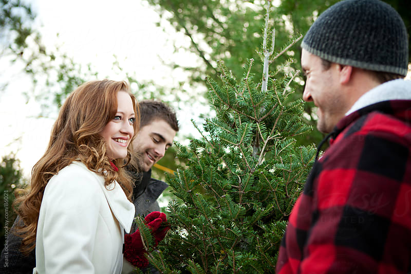 Tree Lot: Man Helping Shoppers Find Right Christmas Tree by Sean Locke for Stocksy United