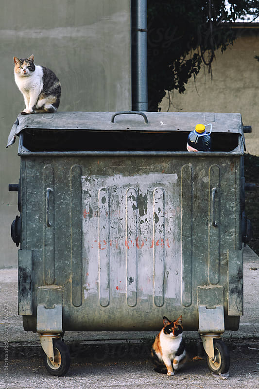 Cats on dumpster  by Pixel Stories for Stocksy United