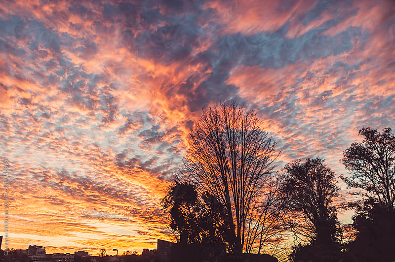 Cirrocumulus Clouds at sunset by Cameron Whitman for Stocksy United