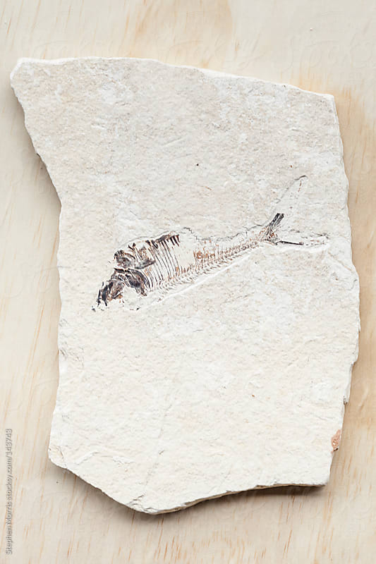 Fossilized fish by Stephen Morris for Stocksy United