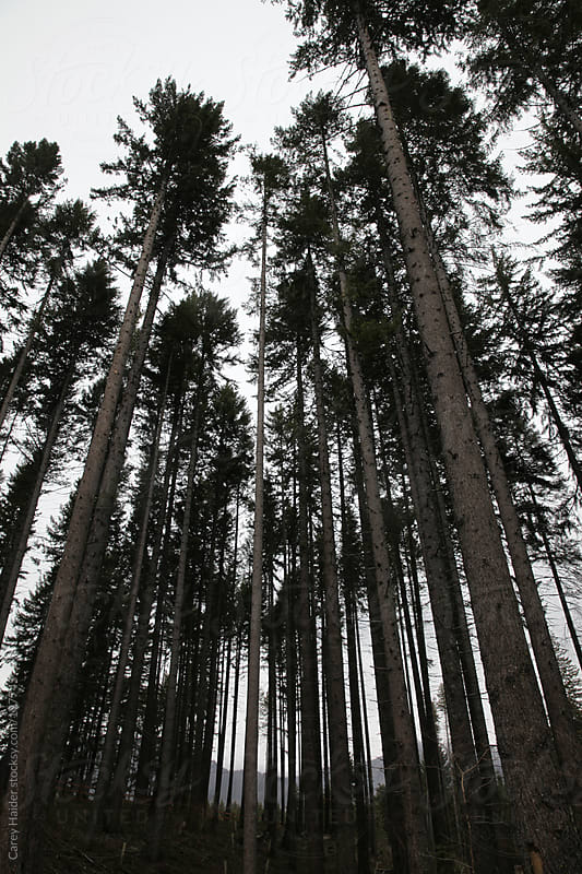 Trees Growing In The Forest by Carey Haider for Stocksy United