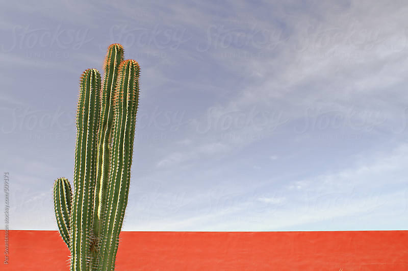 Mexican cactus against red wall by Per Swantesson for Stocksy United