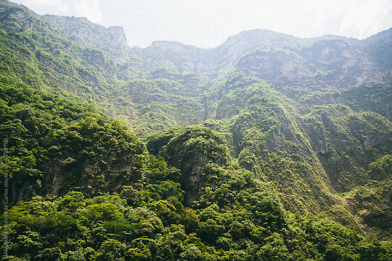 Vegetation and natural impresive scenery of a canyon in a valley in Chiapas, Mexico by Alejandro Moreno de Carlos for Stocksy United