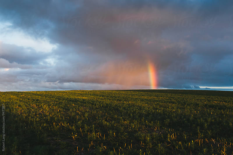 Rainbow over farm  paddock by Robert Lang for Stocksy United