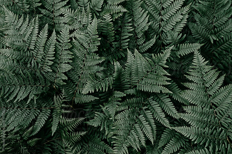 Fern by Preappy for Stocksy United