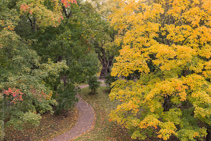 October Foliage and Cobblestone Path in Park by Tom Uhlenberg for Stocksy United