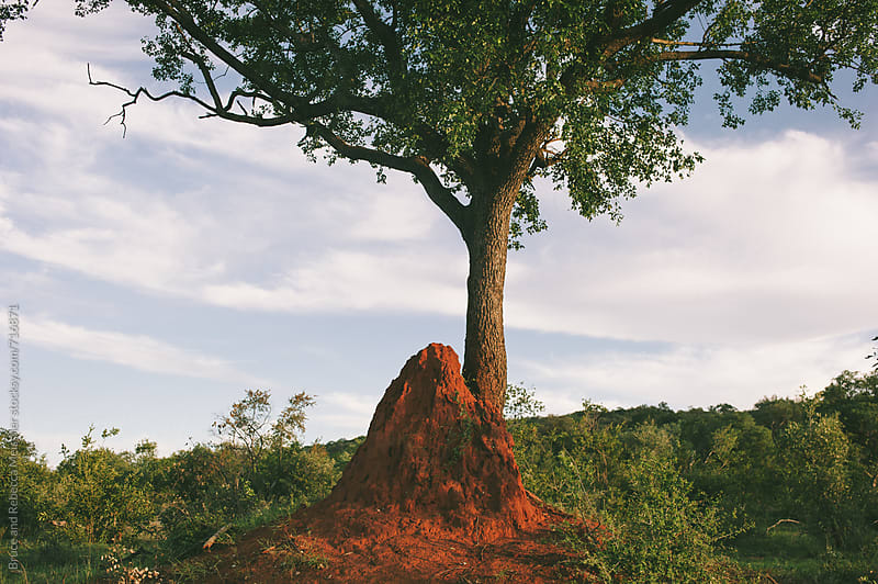 African Landscape by Bruce and Rebecca Meissner for Stocksy United