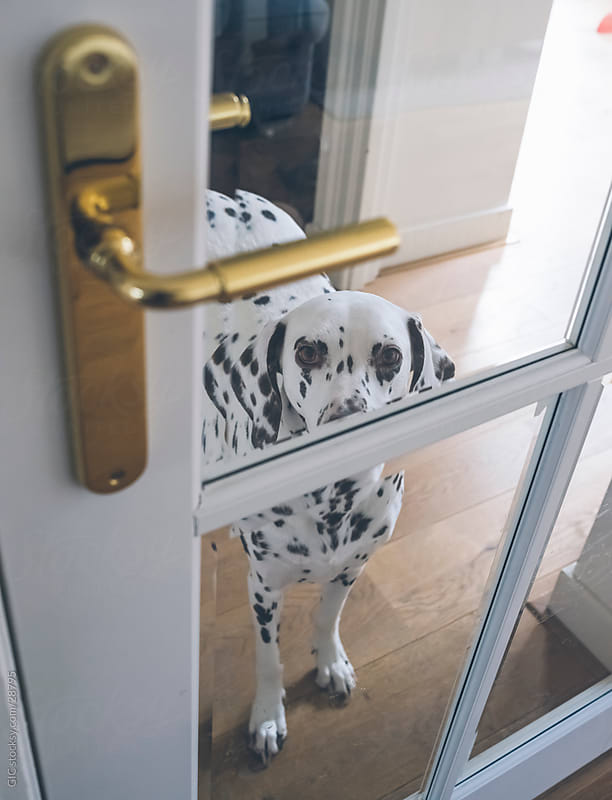 Dog against a door by GIC for Stocksy United