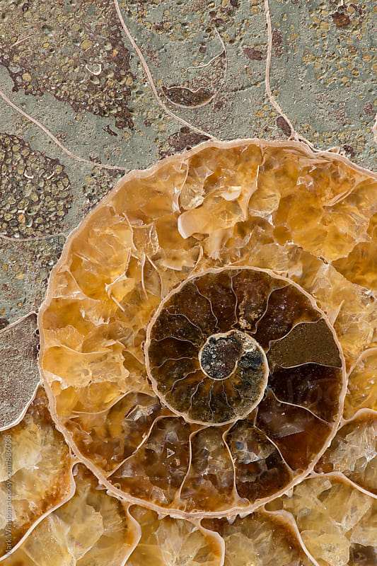 Ammonite Fossil, closeup by Mark Windom for Stocksy United