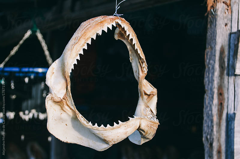 Shark jaw - mouth and teeth hanging from a string by Alejandro Moreno de Carlos for Stocksy United