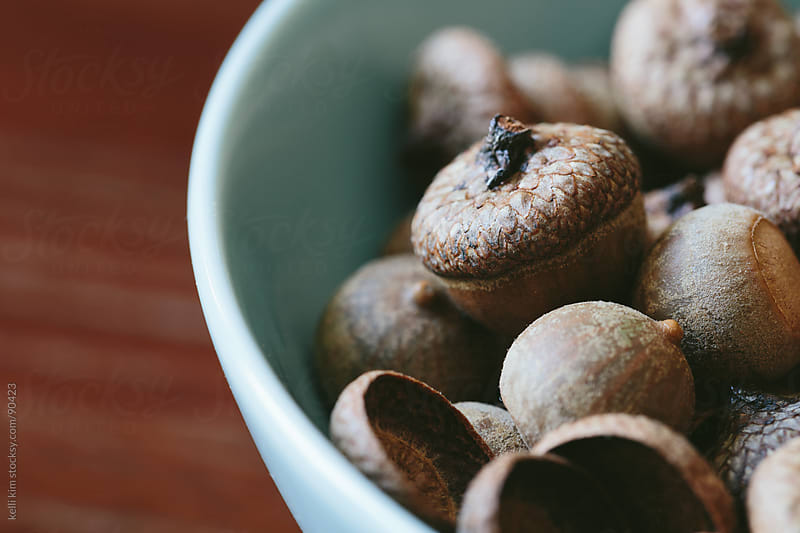 Closeup Of Brown Acorn Nuts In Blue Bowl by Kelli Seeger Kim for Stocksy United