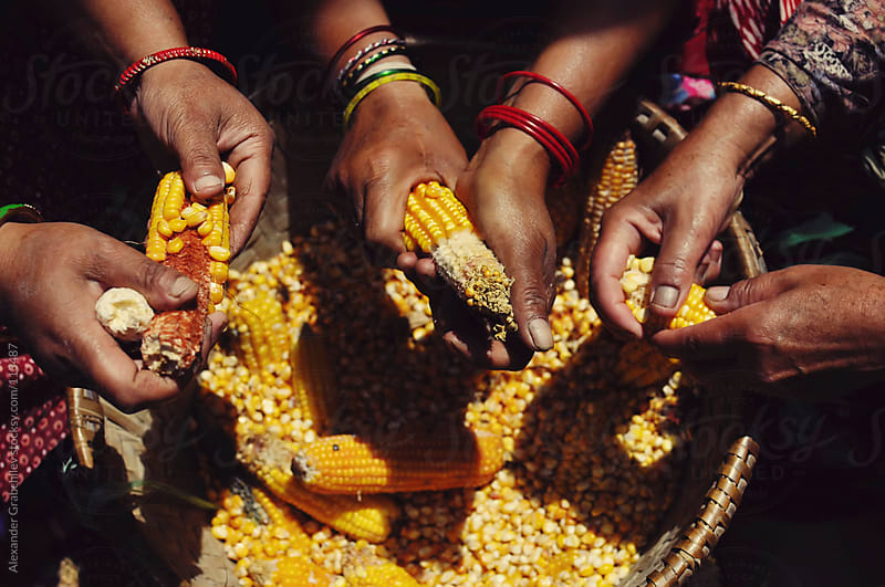 Indian womens peeling corn cobs by Alexander Grabchilev for Stocksy United