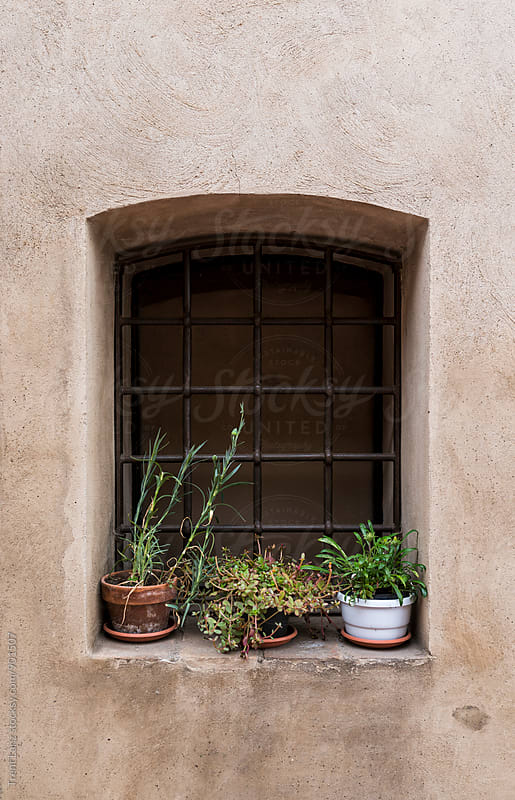 Close-up of closed window with grating and plants in pots by Trent Lanz for Stocksy United