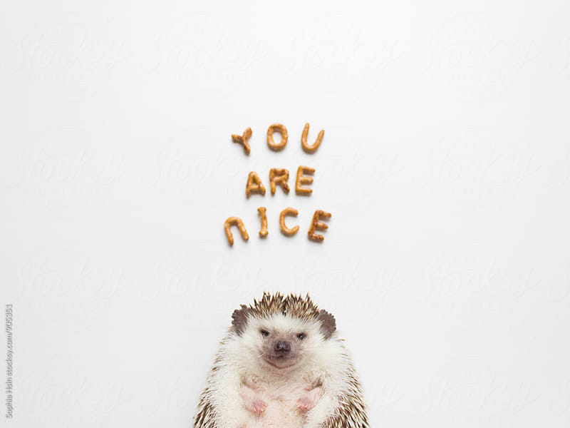 You are nice hedgehog by Sophia Hsin for Stocksy United