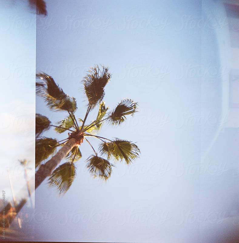 palm tree on film by Lexia Frank for Stocksy United