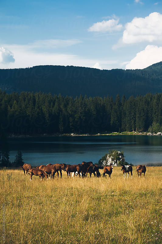 Horse herd in Italy by HEX. for Stocksy United